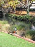 Река в осени Стоковые Изображения