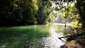 Река в одичалом Стоковые Изображения