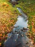Река в парке Стоковое Изображение