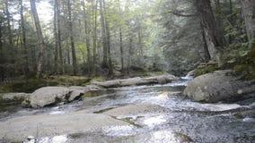 Река в парке Mont Tremblant видеоматериал