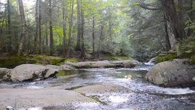 Река в парке Mont Tremblant сток-видео