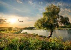 Река в поздним летом Стоковое фото RF