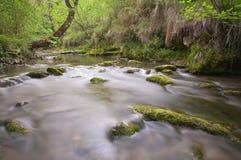 Река в пуще и зеленых валах Стоковое фото RF