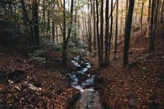 Река в пуще осени стоковая фотография