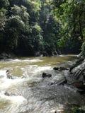 Река в пуще стоковые фотографии rf