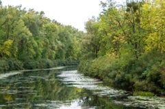 Река в пуще Стоковые Фото