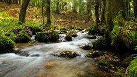 Река в пуще Стоковая Фотография