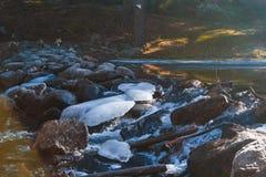 Река в пуще Стоковая Фотография RF