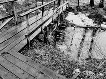 Река в пуще Стоковое Изображение
