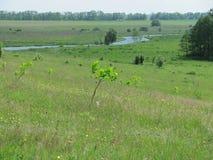 Река в расстоянии Стоковая Фотография RF