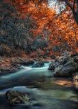 Река в древесинах Стоковая Фотография RF