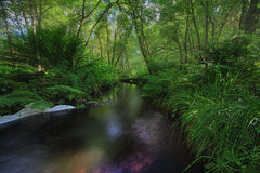 Река в древесине - Норвегия Берген Стоковые Изображения
