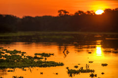 Река в тропическом лесе на сумраке, Перу Амазонки, Южной Америке Стоковая Фотография