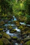 Река в Хорватии Стоковое Изображение RF