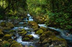 Река в Хорватии Стоковая Фотография RF