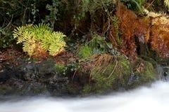 Река Галиции Стоковое фото RF