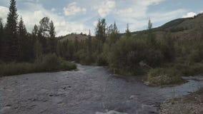 Река горы быстрая вода потока Россия Altai сток-видео