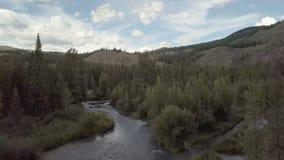 Река горы быстрая вода потока Россия Altai акции видеоматериалы