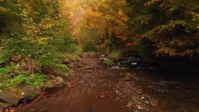 Река горы в горах леса осени прикарпатских акции видеоматериалы