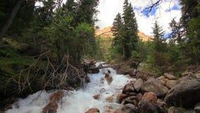 Река горы в конце леса вверх Лето акции видеоматериалы