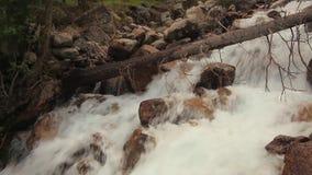 Река горы в конце леса вверх Лето сток-видео