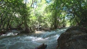 Река горы в лиственном лесе видеоматериал