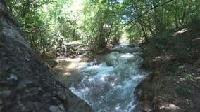 Река горы в лиственном лесе сток-видео