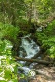 Река горы в прикарпатских горах Стоковое Изображение