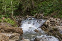 Река горы в прикарпатских горах Стоковое Изображение RF