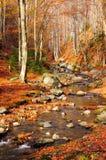 Река горы в пуще осени Стоковое фото RF