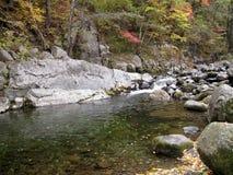 Река горы в пуще Стоковые Изображения RF