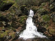 Река горы в пуще Стоковая Фотография