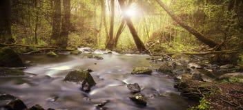 Река горы в древесине Стоковое Изображение