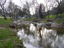 Река горы в середине зеленого леса Стоковое Изображение