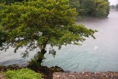 Река горы, деревянное река Стоковое фото RF