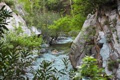 Река горы, красивая вода мелководья горы Речные пороги воды Река горы, водопад речного порога зеленого цвета леса Стоковая Фотография