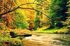Река горы осени Запачканные волны, свежие зеленые мшистые камни и валуны на речном береге покрытом с красочными листьями от старо Стоковое фото RF