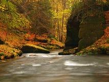Река горы осени с запачканными волнами, свежими зелеными мшистыми камнями, красочным падением Стоковое Изображение RF