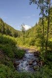 Река горы, прикарпатское Стоковое Изображение
