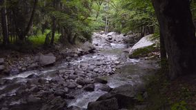 Река горы пропускает быстро в после полудня среди деревьев видеоматериал