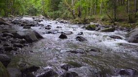 Река горы пропускает быстро в после полудня среди деревьев 4k акции видеоматериалы