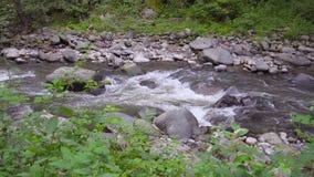 Река горы пропускает быстро в после полудня акции видеоматериалы
