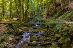 Река горы пропуская над утесами и валунами в лесе стоковое фото rf
