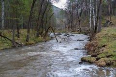 Река горы с холмистыми банками в лесе стоковое фото rf