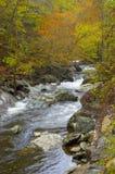 Река горы с цветами падения Стоковое фото RF