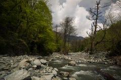 Река горы через лес стоковое фото rf