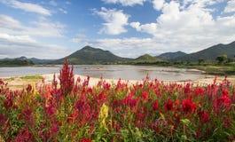 Река горы. Стоковая Фотография