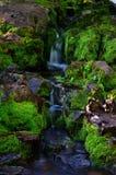 река горы colorado Стоковое Изображение