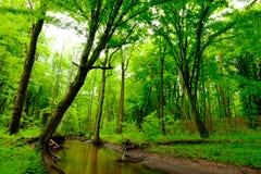 Река глубоко в лесе Стоковые Изображения