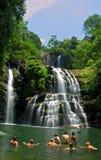 река джунглей стоковые изображения rf